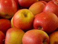 Bild mit Äpfel darauf